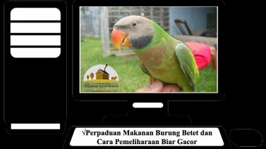 Perpaduan Makanan Burung Betet dan Cara Pemeliharaan Biar Gacor