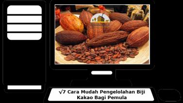 Cara Pengolahan Biji Kakao