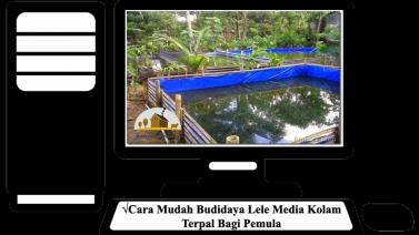 Cara Budidaya Lele Media Di Kolam Terpal