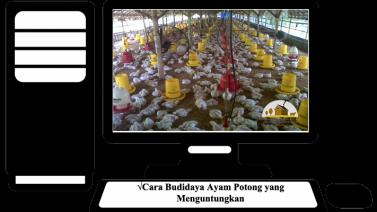 Cara Budidaya Ayam Potong yang Menguntungkan