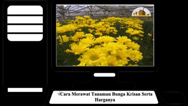 Tag  harga bunga krisan per tangkai 2019 73fb867228