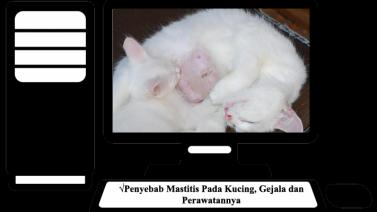 Mastitis Pada Kucing