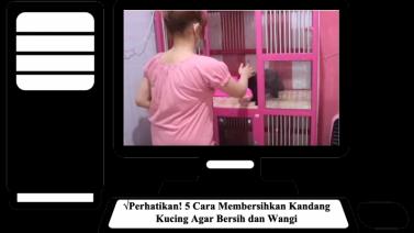Perhatikan! 5 Cara Membersihkan Kandang Kucing Agar Bersih dan Wangi