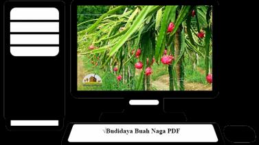 Budidaya Buah Naga