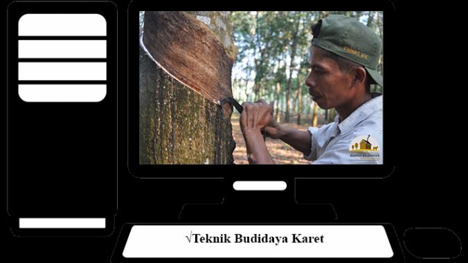 √Teknik Budidaya Karet