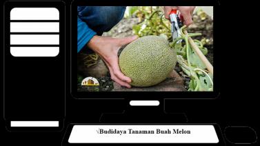 Budidaya Tanaman Buah Melon