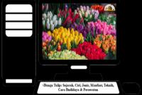 Bunga-Tulip