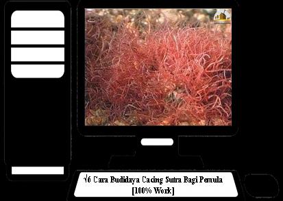 Cara-Budidaya-Cacing-Sutra