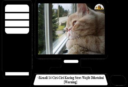 Ciri-Ciri-Kucing-Stres