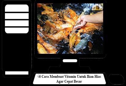 Cara-Membuat-Vitamin-Untuk-Ikan-Hias
