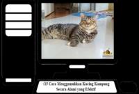 Cara-Menggemukkan-Kucing-Kampung-Secara-Alami