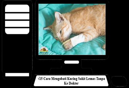 Cara-Mengobati-Kucing-Sakit-Lemas