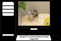 Cara-Merawat-Hamster-Pemula