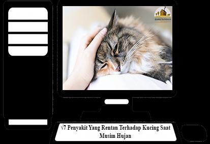Penyakit-Yang-Rentan-Terhadap-Kucing-Saat-Musim-Hujan