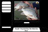 Penyebab-Ikan-Nila-Tidak-Mau-Besar