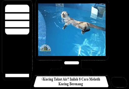 Cara-Melatih-Kucing-Berenang