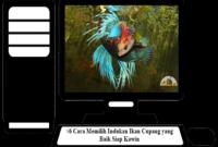 Cara-Memilih-Indukan-Ikan-Cupang-yang-Baik
