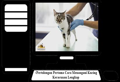 Cara-Menangani-Kucing-Keracunan