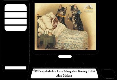 Cara-Mengatasi-Kucing-Tidak-Mau-Makan