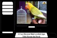 Cara-Merawat-Bulu-Lovebird