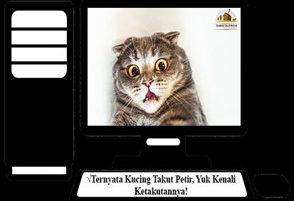 Kucing-Takut-Petir
