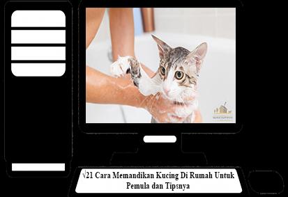 Cara-Memandikan-Kucing-Di-Rumah