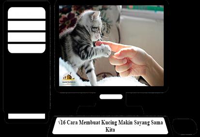 Cara-Membuat-Kucing-Makin-Sayang-Sama-Kita