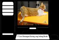 Cara-Menangani-Kucing-yang-Sedang-Birahi