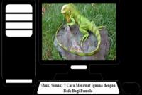 Cara-Merawat-Iguana-dengan-Baik