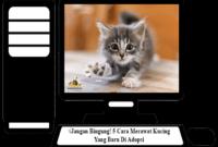 Cara-Merawat-Kucing-Yang-Baru-Di-Adopsi