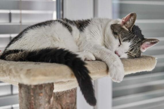Alasan-Tidak-Boleh-Mengganggu-Kucing-Tidur