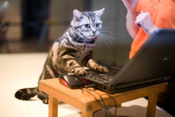 Cara-Membuat-Kucing-Cepat-Beradaptasi