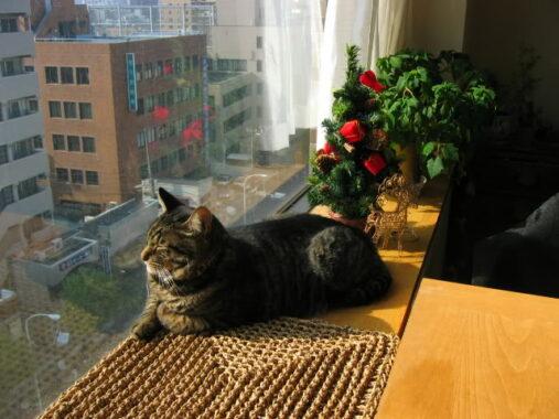 Cara-Memelihara-Kucing-di-Apartemen
