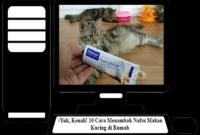 Cara-Menambah-Nafsu-Makan-Kucing
