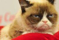 Cara-Mengatasi-Kucing-Trauma