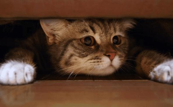 Cara-Mengatasi-Kucing-yang-Ketakutan