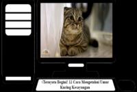 Cara-Mengetahui-Umur-Kucing