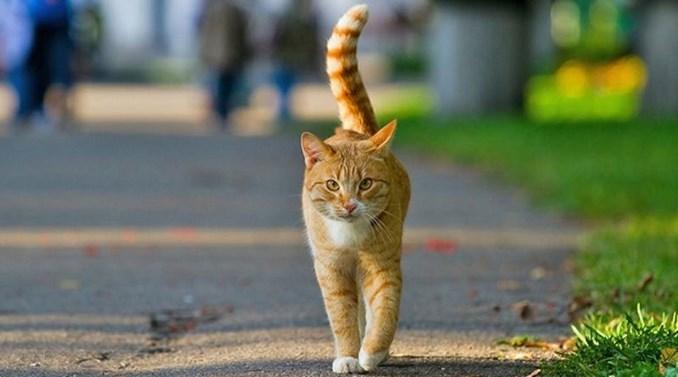 Cara-Menjinakan-Kucing-Liar