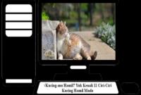 Ciri-Ciri-Kucing-Hamil-Muda