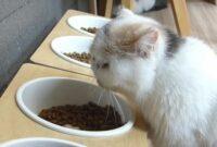 Makanan-Kucing-Persia