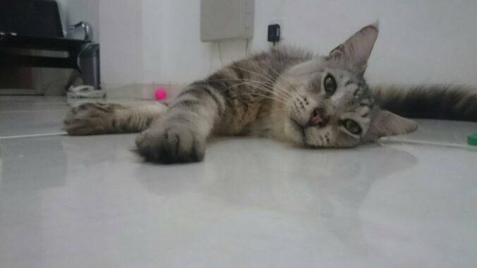Tanda-Kucing-Betina-Tidak-Mau-Kawin