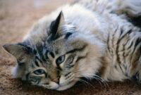 Tanda-Kucing-Depresi