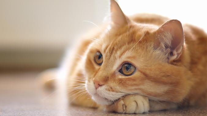 Tanda-Kucing-Gelisah