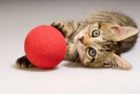 Tanda-Kucing-Ingin-Bermain