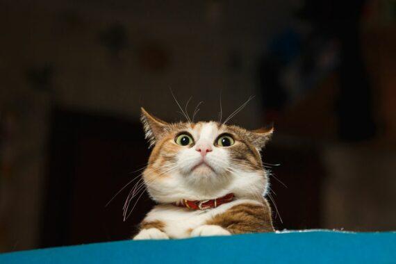 Tanda-Kucing-Ketakutan