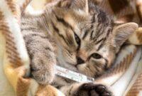 Tanda-Kucing-Sembuh-dari-Flu