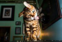 Tanda-Kucing-Tiba-Tiba-Bertingkah-Aneh