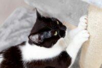 Tingkah-Laku-Kucing-Dan-Artinya