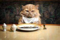 Alasan-Kenapa-Kucing-Suka-Ikan