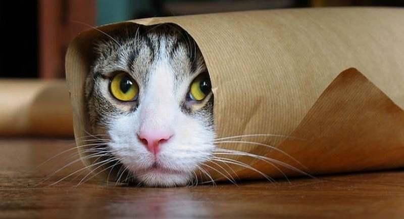 Alasan-Kucing-Peliharaan-Menghilang